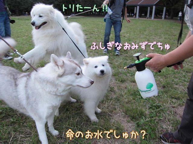 おっきな公園3連勤!の続き_c0062832_745761.jpg
