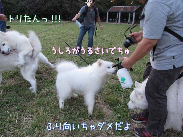 おっきな公園3連勤!の続き_c0062832_75341.jpg