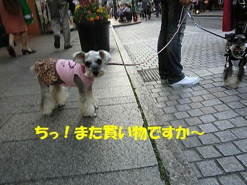 b0206444_1605892.jpg