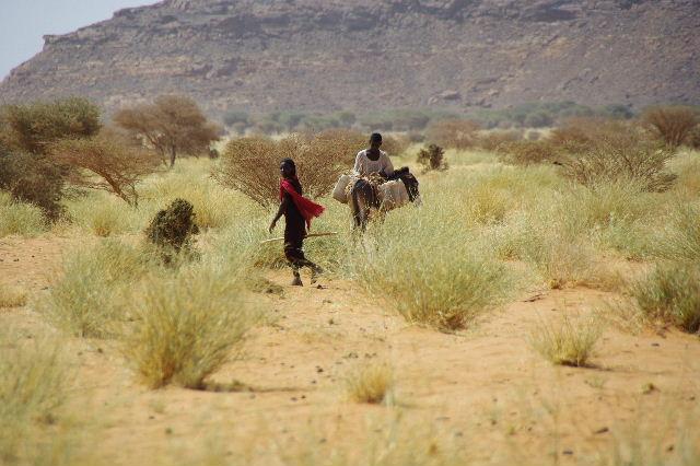 【スーダン周遊】 ムサワラット遺跡 (6) 湧水池の風景_c0011649_20272951.jpg