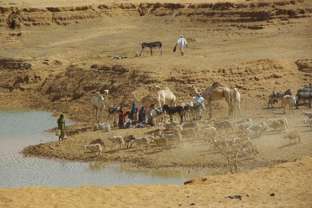 【スーダン周遊】 ムサワラット遺跡 (6) 湧水池の風景_c0011649_2029017.jpg