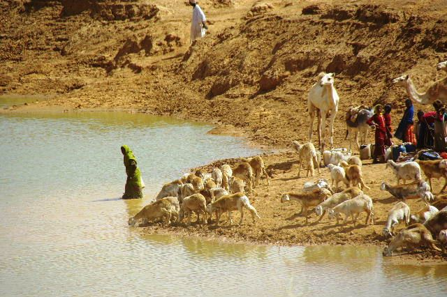 【スーダン周遊】 ムサワラット遺跡 (6) 湧水池の風景_c0011649_20294232.jpg