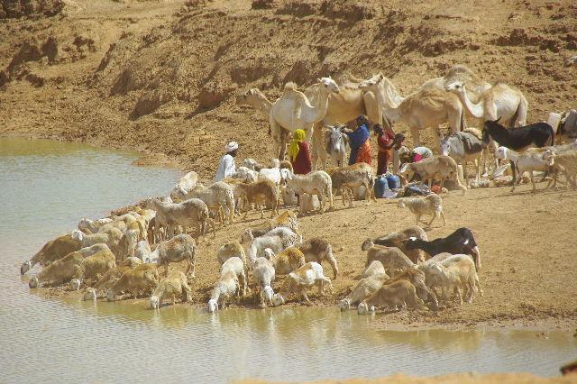 【スーダン周遊】 ムサワラット遺跡 (6) 湧水池の風景_c0011649_2033476.jpg