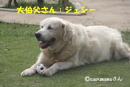 c0214455_1353111.jpg