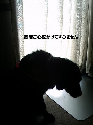 d0128364_18531025.jpg