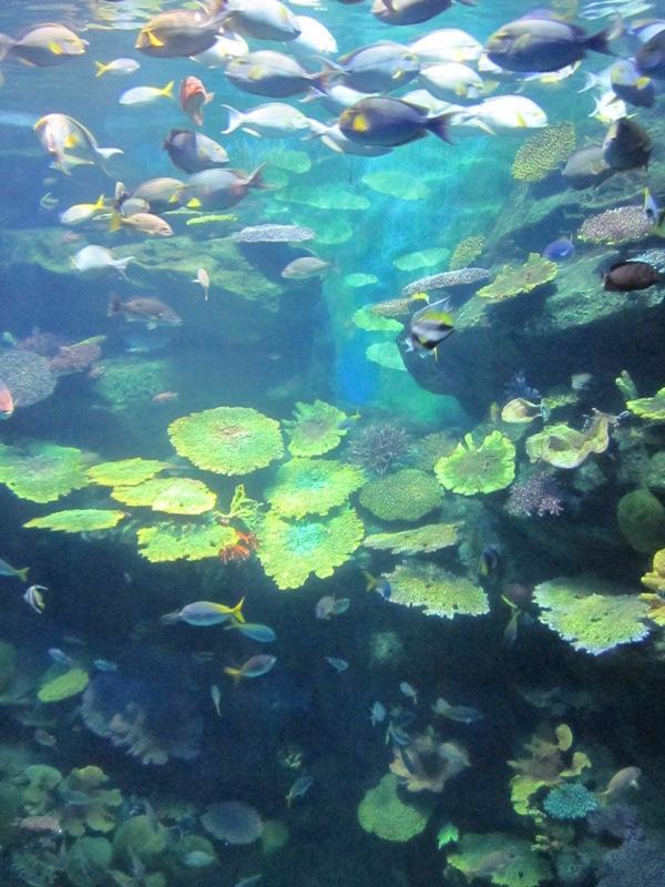 UNDER THE SEA    ~ 海の世界_d0103566_9421761.jpg
