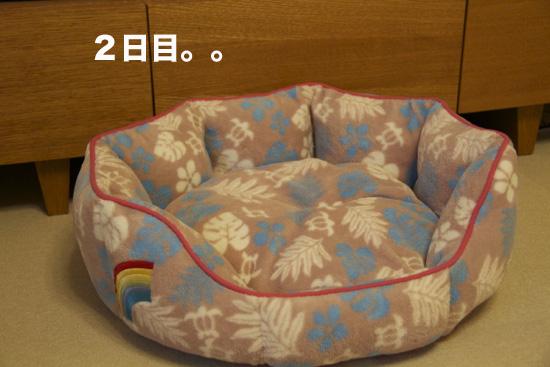 b0130271_1557383.jpg