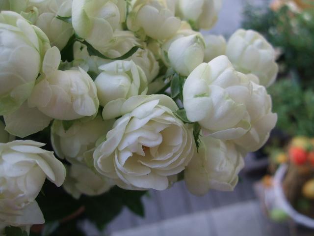オークリーフ(白いダリアのある風景)_f0049672_14595175.jpg