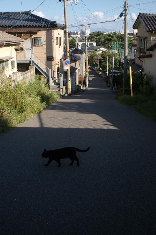 猫の惑星_e0082981_2110129.jpg