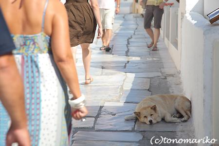 サントリーニ島のお散歩_c0024345_15543458.jpg