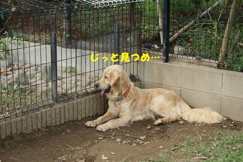 c0214455_12515436.jpg