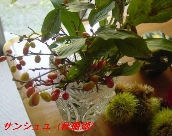f0179357_1373597.jpg