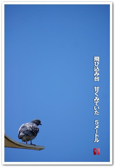 b0163466_1673744.jpg