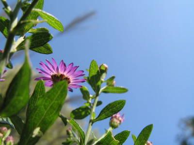 花から見えている空_a0129867_8481128.jpg