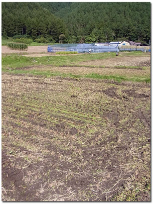(報告 PART2) 稲刈り、終わりました。_f0236291_17113161.jpg