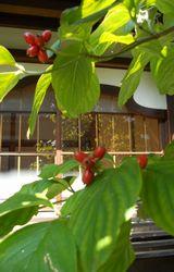 季節は変わる、、、、_f0218407_9433712.jpg
