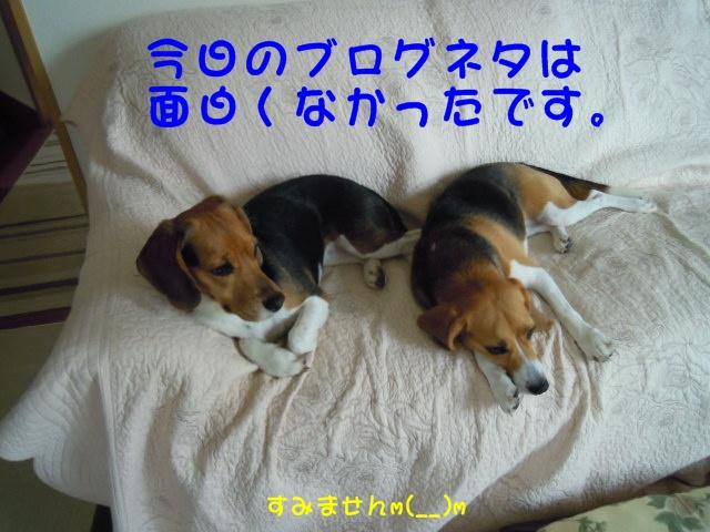 c0166622_8305571.jpg