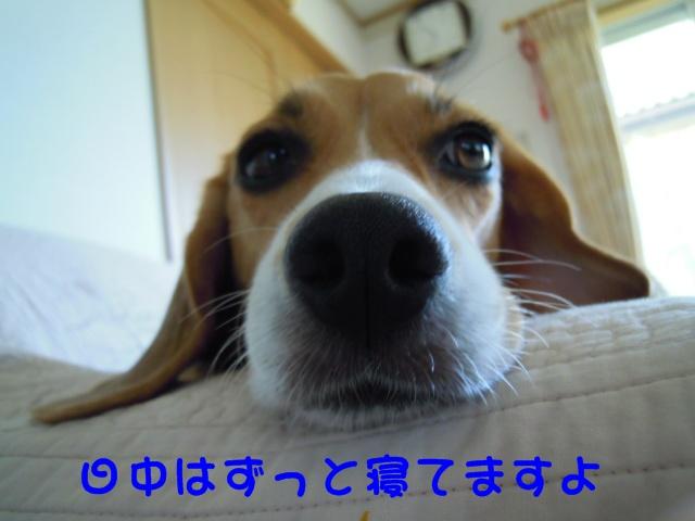 c0166622_830665.jpg