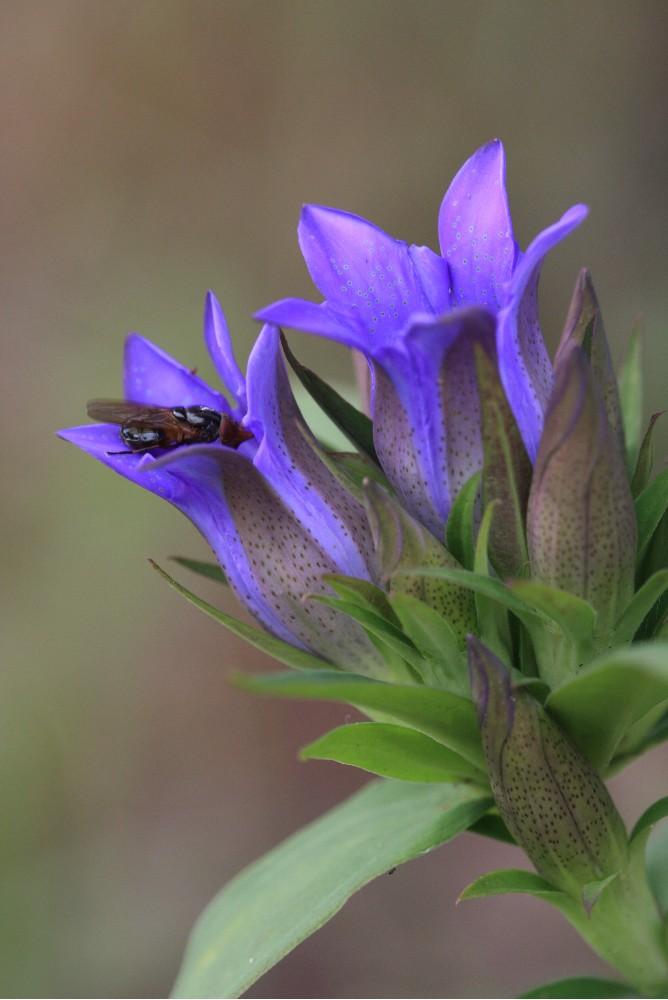庭の花っこと虫たち_c0111229_1843861.jpg