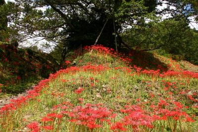 仏隆寺の彼岸花と高城岳810m・三郎が岳879m 奈良県_d0055236_11581260.jpg