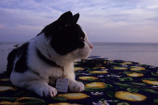 来年の夏も、きっと一緒に海へ行こうね。~2011~_c0181457_321519.jpg