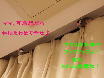 b0158061_22463081.jpg