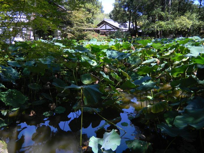 Photo-sketch of Nara: 唐招提寺/Toshodaiji _e0140365_22412321.jpg