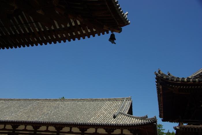 Photo-sketch of Nara: 唐招提寺/Toshodaiji _e0140365_2243836.jpg