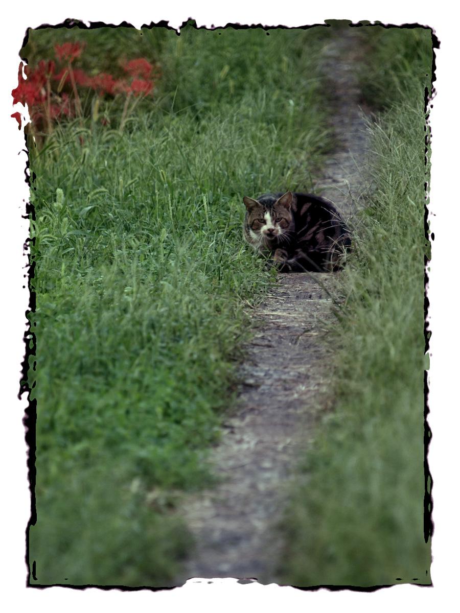 猫にゃん_f0021869_22122130.jpg