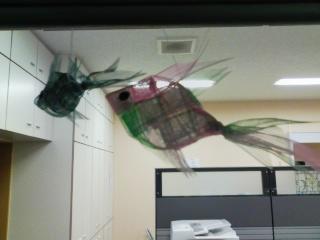 金魚が飛んでます!_a0079474_18245231.jpg