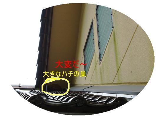 a0199979_16394461.jpg