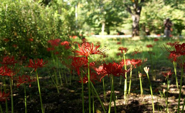 岩木山八合目と、植物園の彼岸花など♪_a0136293_1611564.jpg
