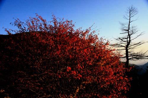 秋色に変わり始めた高原_e0120896_14574982.jpg