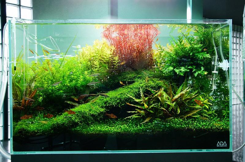 Nature Aquarium Gallery 2011 À�2】 Zero Aqua