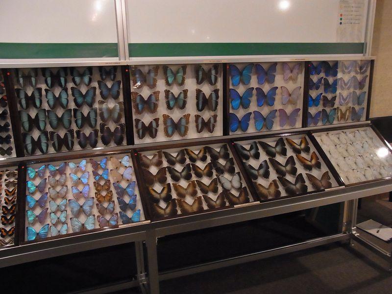 不安定な天気 博物館「チョウとガの世界」展明日まで_c0025115_1893344.jpg