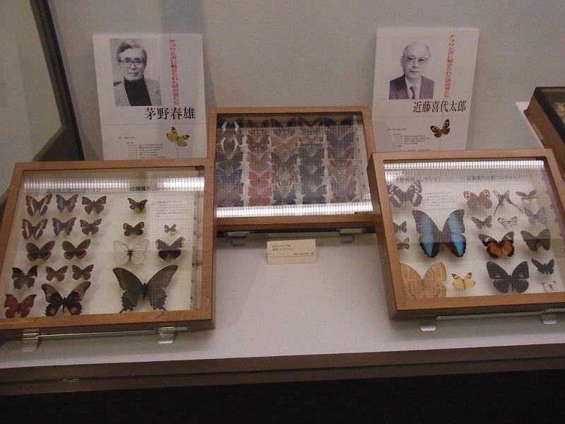 不安定な天気 博物館「チョウとガの世界」展明日まで_c0025115_1893611.jpg
