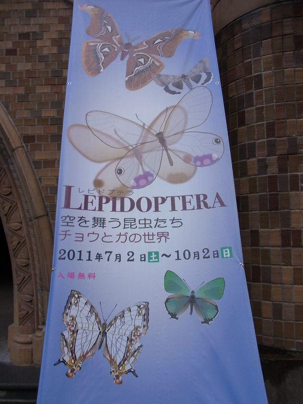 不安定な天気 博物館「チョウとガの世界」展明日まで_c0025115_189497.jpg