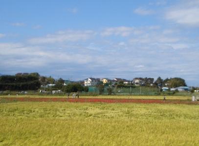 彼岸花 小出川 2011_d0240916_153041.jpg