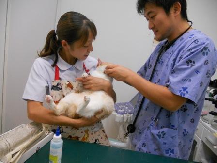 のんちゃん、ワクチン。_f0233018_1044516.jpg