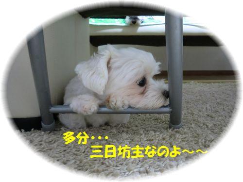 b0206444_139440.jpg