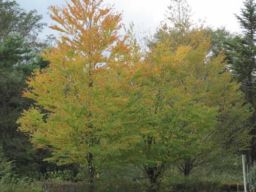 秋の空の下で_f0236260_1821442.jpg