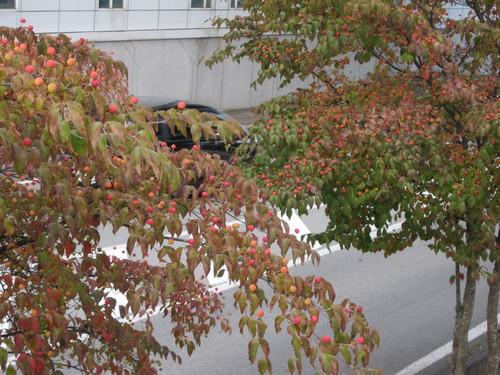 秋の空の下で_f0236260_1851052.jpg