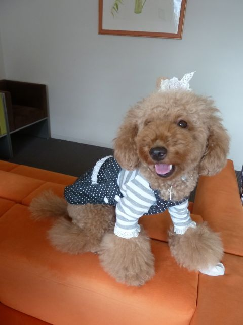 2011.10.1   ubu-buさんの服_a0083571_14392999.jpg
