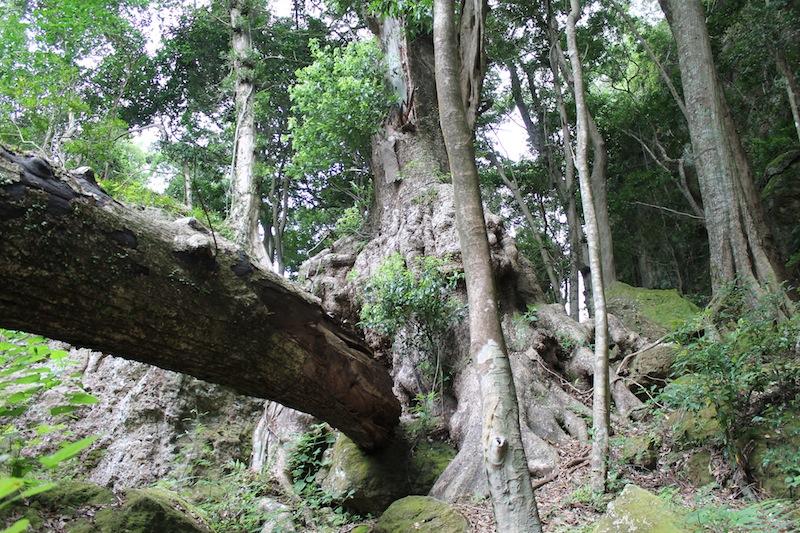 神内神社(2011.8.24)_c0173978_2451948.jpg