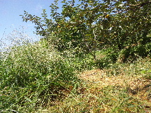 草刈りという大仕事。_f0018099_758526.jpg