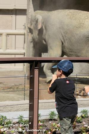 動物園_a0169912_1549894.jpg
