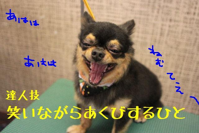 b0130018_9251266.jpg