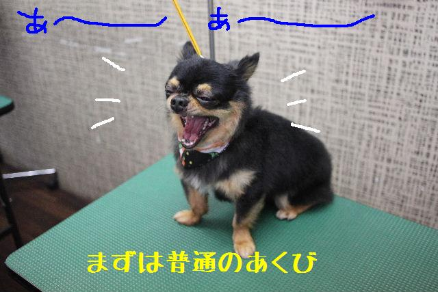 b0130018_92586.jpg