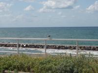 福島第1原発:45キロ離れた飯舘でプルトニウム検出_d0235522_10503240.jpg