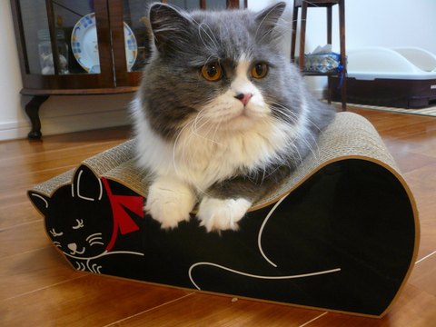 黒ネコさん_e0237625_221028.jpg